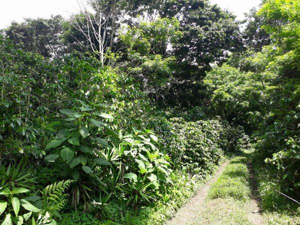 El Salvador direct trade koffie