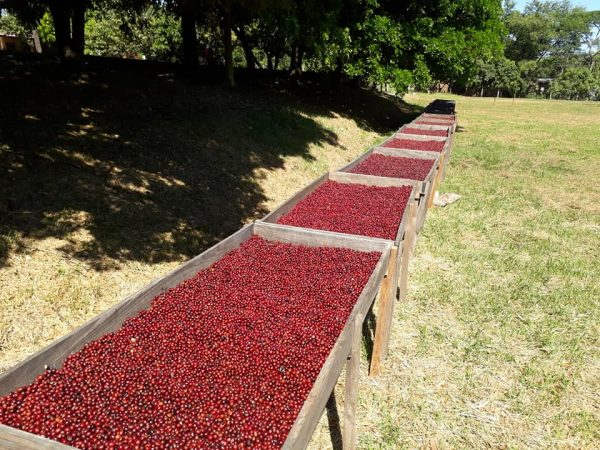 El Salvador direct trade koffie